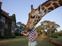 Taken at Giraffe Manor, a boutique hotel in Kenya. Wanna go so bad!