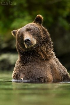 Visit Katmai National Park  (Alaska) and observe Brown Bears in their element..(this is one that has been on my bucket list for a long time!)