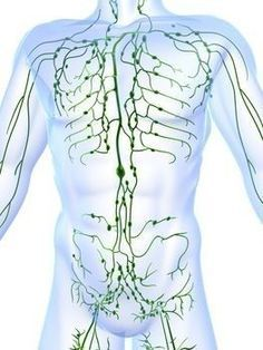 7 Ways to Create a Healthy Lymphatic System The lymphatic system is like a sewage system for cellular waste in the body. The lymphatic system rids the body of sewage Qigong, Lymph Fluid, Lymphatic Drainage Massage, True Health, Benefits Of Exercise, Alternative Therapies, Alternative Health, Lymphatic System, Cleanse