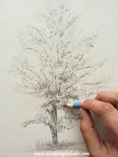 Swati Singh Art   Blog  Sketch on Saturday by Swati Singh. How to draw an aspen…