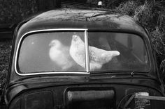 IRELAND. County Sligo. Glencar. Abandoned Morris Minors. From 'A Fair Day'. 1980-1983 http://www.fubiz.net/en/2017/01/17/martin-parr-wpo-outstanding-contribution-to-photography-price/