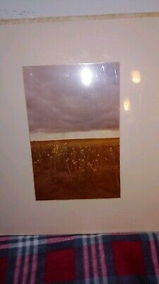 """Allan Bruce Zee Signed Matted Limited 1975 """"Wildflower's"""" Deerfield, CO Central America, South America, Ebay Paintings, Ironwood Tree, Nature Artists, Oval Frame, Southeast Asia, Priority Mail, Wild Flowers"""