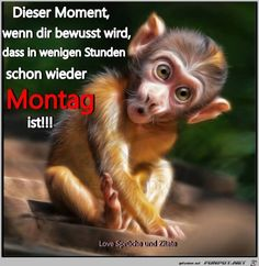 """""""Baby monkey"""" by photoplace, 2015 , Animals And Pets, Baby Animals, Funny Animals, Cute Animals, Facebook Humor, Meme Comics, Grumpy Cat, Super Funny, Funny Pictures"""