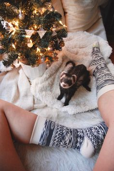 Merry Christmas with ferret.