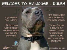 pitbull funny house rules dog love