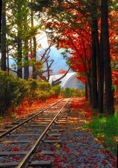 Fall tracks. Source Facebook.com