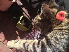 I ❤️ my cat! #MrJimi