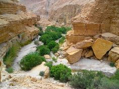 Ein Gedi nature reserve and national park, Israel
