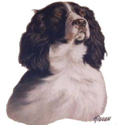 English Springer Spaniel T Shirt,  Quilt Fabric Block, Tote Bag, Apron, Tote Bag, (Sweatshirt,  Hoodie Available On Request) #910b by AlwaysInStitchesCo on Etsy
