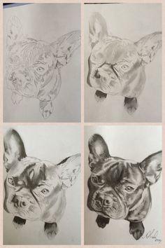 Progress shots of Mr Frenchie