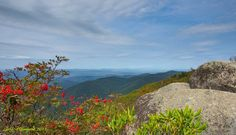Facebook Blue Ridge Parkway, Timeline Photos, Mountains, Facebook, Landscape, Nature, Travel, Viajes, Traveling