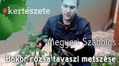 Bokor - Park rózsa tavaszi metszése - Megyeri Szabolcs Kertészete Budapest