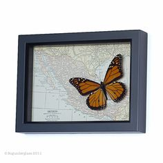 Real Framed Monarch Butterfly with Vintage Map of Mexico from BugUnderGlass