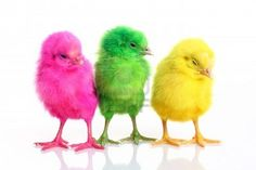 Unique Easter Bank Holiday weekend marketing & events ideas for bars,pubs,restaurants,bistros,cafes and the commercial catering industry. Nostalgia, Easter Toys, Chicken Chick, Rhymes For Kids, Old Advertisements, Bank Holiday Weekend, Baby Chicks, Learning Colors, Egg Decorating