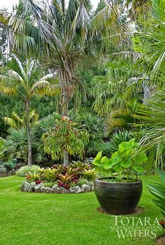 Lotus Bowl at Totara Waters Sub-Tropical Garden - Garden Stay Accommodation - New Zealand #TropicalGarden