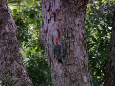 A woodpecker finds a spot to his liking. Your garden will thank you for it, as will the birds and the bees. They need our help, too, to stay healthy and happy in our increasingly concrete society.