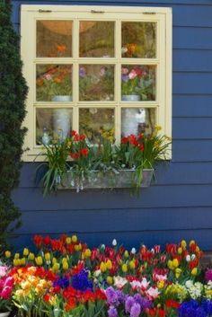 http://us.123rf.com/400wm/400/400/colette2/colette21005/colette2100500070/7065997-ventana-en-la-pared-azul-con-coloridas-flores-en-primavera.jpg