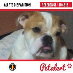 Cette Alerte est désormais close : elle n'est donc plus visible sur la plate-forme www.petalert.be.  Merci pour votre aide.