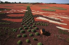 The Australian Garden by landscape studio Taylor Cullity Lethlean and plant expert Paul Thompson is a area of the Royal Botanic Gardens in Cranbourne, Australia, dedicated to the country's indigenous plant life. Landscape Elements, Contemporary Landscape, Urban Landscape, Landscape Design, Garden Design, World Architecture Festival, Urban Architecture, Bush Garden, Australian Garden