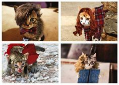 Doctor Who: Kitty Who
