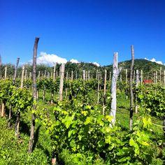 vigne di Prosecco Asolo -love Asolo and Italian Prosecco!