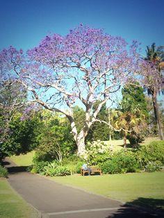October 11, 2013: Botanical Park Sydney via Kim Wilde's twitter feed
