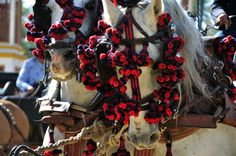 Visit the spring horse fair in Jerez in May We offer tailor made packages to the Jerez Feria in Spain with special trips to the Royal Riding School, a Bodega and horse riding lessons on well schooled Andalucian horses Traditional Spanish Music, Tio Pepe, Horse Caballo, Horse Dance, Riding Holiday, Easy Jet, Spain Holidays, Riding Lessons, Show Jumping