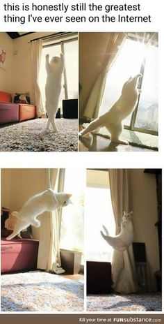 Cat yoga. That's why people call one of the yoga poses..... the downward facing cat or something