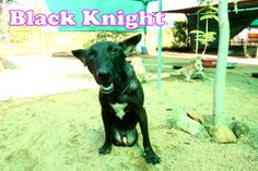 Knight is a pretty active dog. Active in fighting and playing.