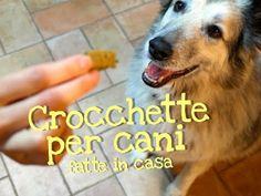CROCCHETTE PER CANI FATTE IN CASA DA BENEDETTA - Homemade Dog Food - YouTube