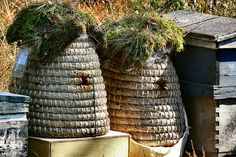 Picturesque hives -- does the moss offer enough overhead protection? I Love Bees, Birds And The Bees, Primates, Bee Skep, Bee Hives, Buzzy Bee, Vintage Bee, Bee Art, Bee Happy