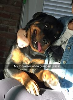 For him its like the-wind-thru-his-fur, energy-to-burn, all-the-treats-you-can-eat kind of day. Funny Animal Pictures Of The. The post Funny Animal Pictures Of The Day & 26 Pics appeared first on Travers Rottweilers. Funny Animal Photos, Funny Animal Memes, Cute Funny Animals, Dog Memes, Dog Pictures, Funny Dogs, Funny Pictures, Funny Humor, Animal Humor