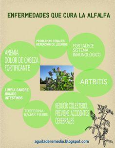 ALFALFA USO MEDICINAL en Ecuador