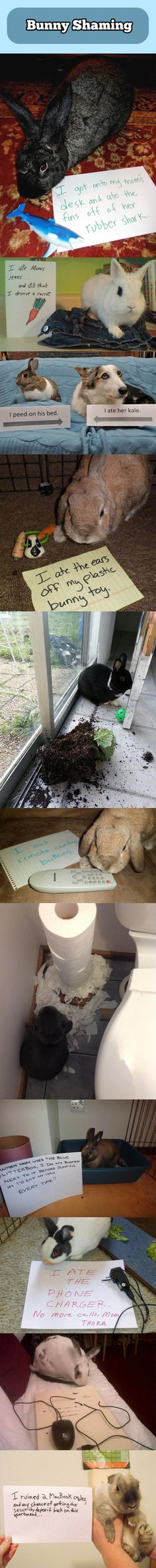 You've seen dog shaming before. Now we present to you... bunny shaming!