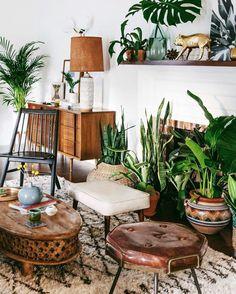 H ngepflanze zimmerpflanzen urban jungle zimmerpflanzen for Raumgestaltung mit zimmerpflanzen