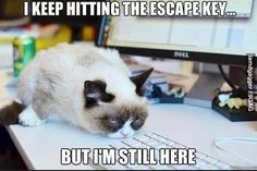 Grumpy cat, grumpy cat meme, grumpy cat quotes, funny grumpy cat quotes, grumpy cat jokes …For the funniest quotes and hilarious pictures visit www. Grumpy Cat Quotes, Funny Grumpy Cat Memes, Hilarious Memes, Cute Cat Memes, Fun Jokes, Funny Pranks, Funny Gifs, Videos Funny, Funny Texts