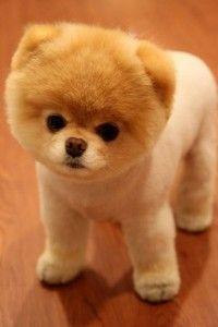 Amigos el perro mas tierno y lindo de todos                              …