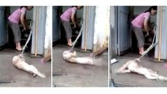 Petition: Woman cooks dogs alive with a smile on her face – act now!