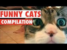 Funny Cats Compilation 2017 | Most See Funny Cat Videos | Fail Academy