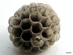 Wasp's nest ~ although the thought of one of these nests usually strikes fear; the effort, design and execution is down right facinating