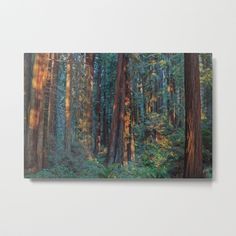 Buy Redwood Sunrise Metal Print by markalder. Worldwide shipping available at Society6.com. Just one of millions of high quality products available.