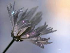 My Enchantments : Photo