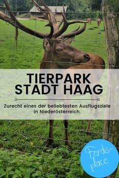 Der Tierpark in der Stadt Haag ist zurecht eines der beliebtesten Ausflugsziele in Niederösterreich. Das Areal ist riesig und schön, über 700 Tiere gibt es zu bestaunen und einen tollen Spielplatz gibt es obendrein. Ideal für Familien. #Niederösterreich #Tierpark #Ausflug #Haag #Österreich #Tipp Park, Travel, Animals, Holiday, Hiking With Kids, Families, Road Trip Destinations, Travel Advice, Viajes
