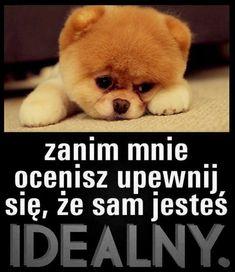 Motto, Teddy Bear, Dogs, Animals, Polish, Quotes, Crafts, Amor, Biblia