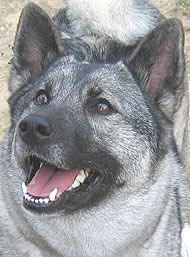 this doggy has the same smile as my doggy!