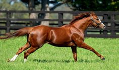 New Helmet, Thoroughbred Horse, Beautiful Horses, Animals, Google, Beauty, Sport, Trotter, Pretty Horses
