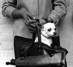Chihuahua in a purse, Olvera Street, Los Angeles, 1967 (William Reagh)