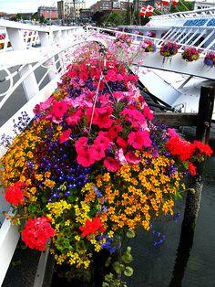 Hanging flower baskets, Victoria harbour 2008 | Flickr - Photo Sharing!