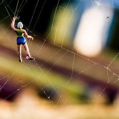 Cobweb climber...