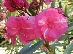 fiori da giardino giardino fiorito : ... CONSIGLI UTILI] - Fiori e Piante Decoraciooooooon ? Pinterest